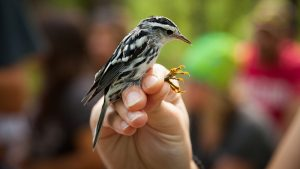 For the birds: Identifying, monitoring birds assists conservation efforts