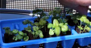zipgrow-plants