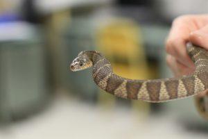 Animal watch: Be aware, appreciate natural ecosystem