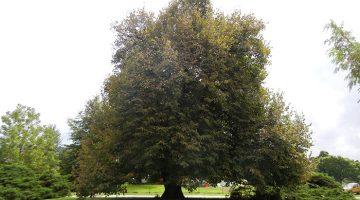 Ozarks Arboretum awarded Level I Accreditation