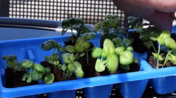 Sustainability efforts continue to grow