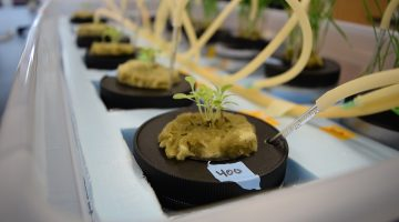 How to grow plants hydroponically