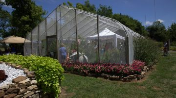 Native butterfly species thrive in local butterfly house