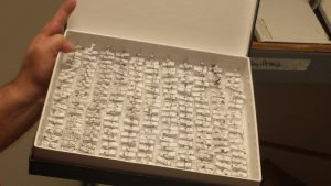 A sample box of mosquitoes