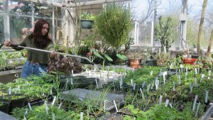 Plants galore at Annual Plant Sale