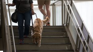 A student with a seeing eye dog