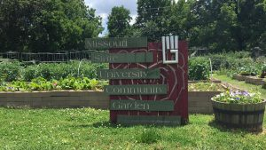 Growing a community garden