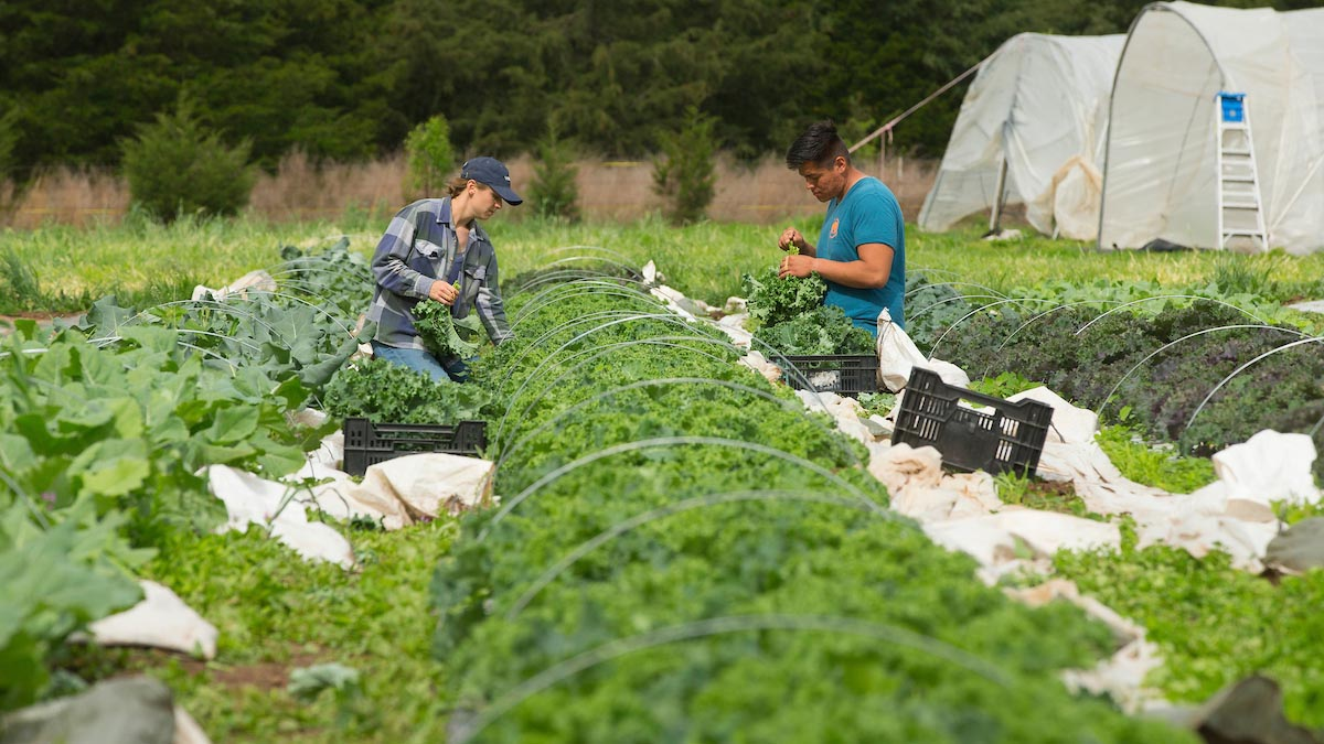 Farmers harvest at Millsap Farms