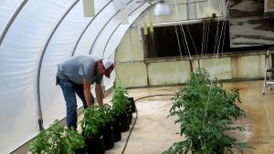 Delve into greenhouse and high tunnel growing