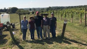 Helping to create the next generation of grapes