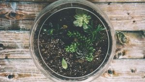 Use a terrarium to grow plants