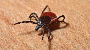 Be aware of tick bites
