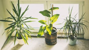 Three types of indoor plants