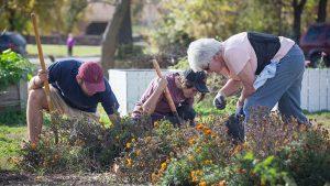 Three individuals work on a garden.