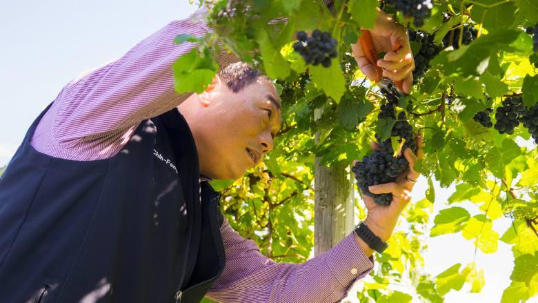 Hwang cuts grapes