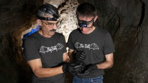 Drs. Tom Tomasi and Chris Lupfer examine a bat at Sequiota Park.