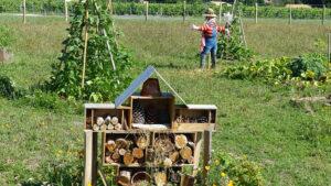 A permaculture garden